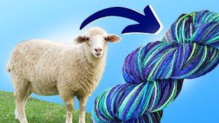 Spinning Sock Yarn from a Dorset Fleece