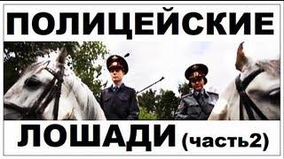 Галилео. Полицейские лошади (часть 2)