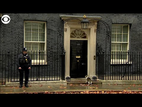 Wendy - Downing St. Policeman Knocks On Number 10 To Let Cat In