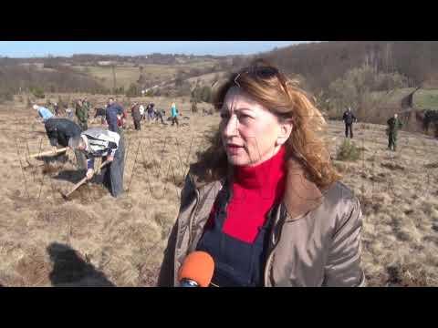 TV5 - Akcijaši posadili 7.000 sadnica belog bora u Staparima