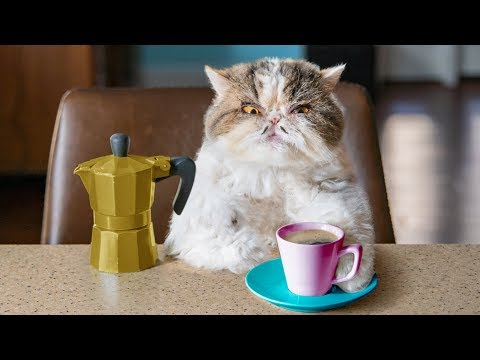 Catfinated - When Cats Drink Coffee