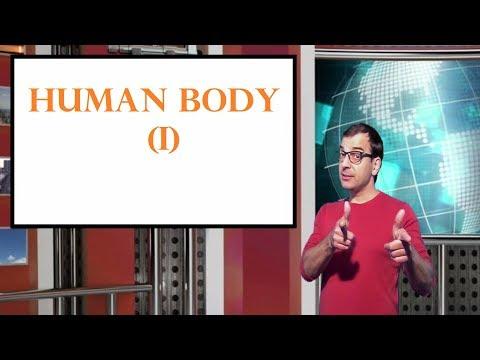 CACHITOS DE INGLÉS - LESSON 20: HUMAN BODY (I)