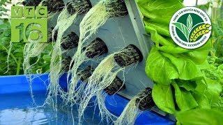 Trồng rau sạch VietGAP, cả HTX thu tiền tỷ | VTC16