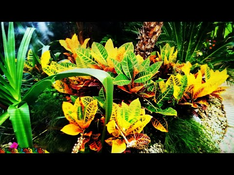 🌴🌈🌺AMAZING RAINBOW PLANTS! CROTONS! 🌺🌈🌴|| How to Grow || Tropical Plant Party