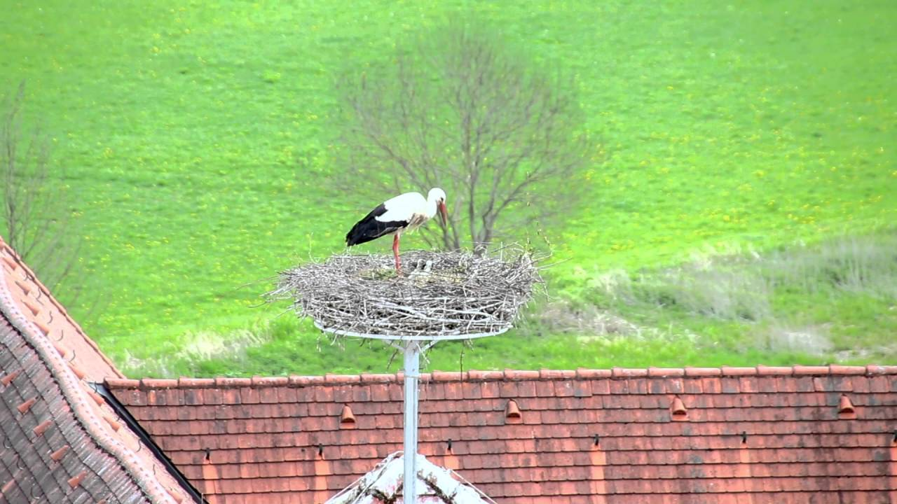 Storch-News Kloster Wiblingen 04. Mai 2016 - YouTube