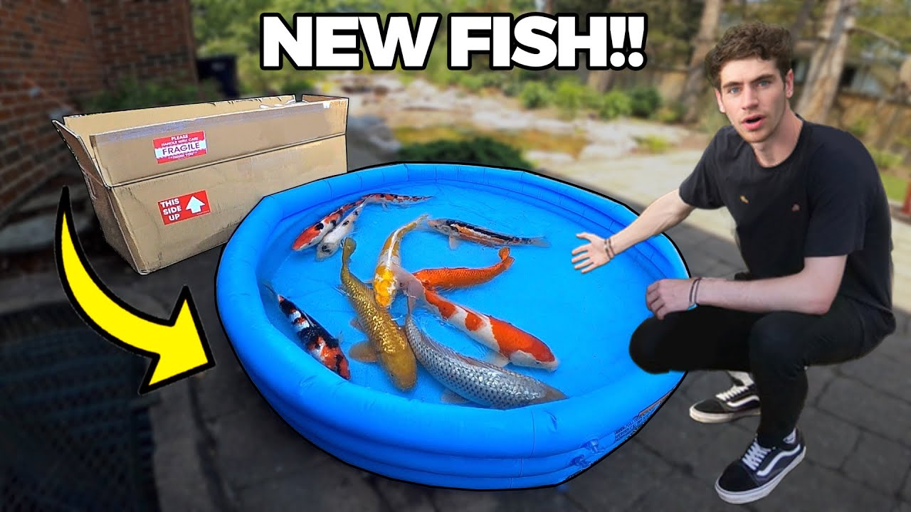 UNBOXING MY NEW PET KOI FISH for BACKYARD POND!!
