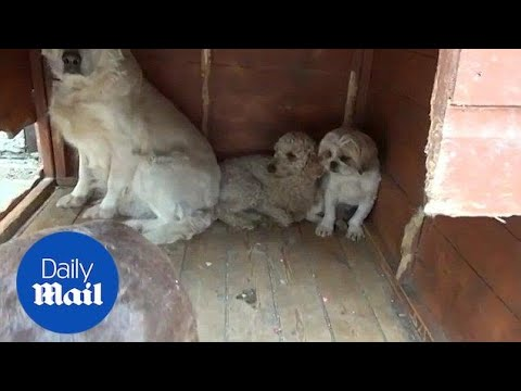 RSPCA Raid Property Used For Illegal Puppy Trade In London - Daily Mail