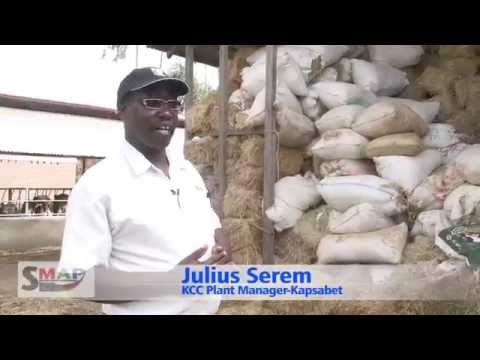 Feed Conservation for Dairy Cattle