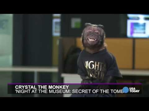 Crystal the monkey confirms: Bradley Cooper is a diva