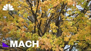 Why Leaves Change Color: The Science Of Fall Foliage | Mach | NBC News