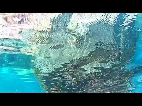 離島の海の中(4の背後カメラ)/21秒