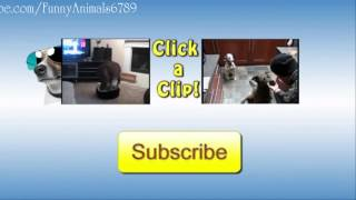 Kitten Fails - Stupid Cats Fails 2014 Funny Cat Videos - Funny Animals - Fail Compilation