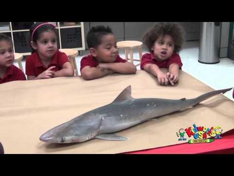 KIDWORKS USA, Shark Class 2015