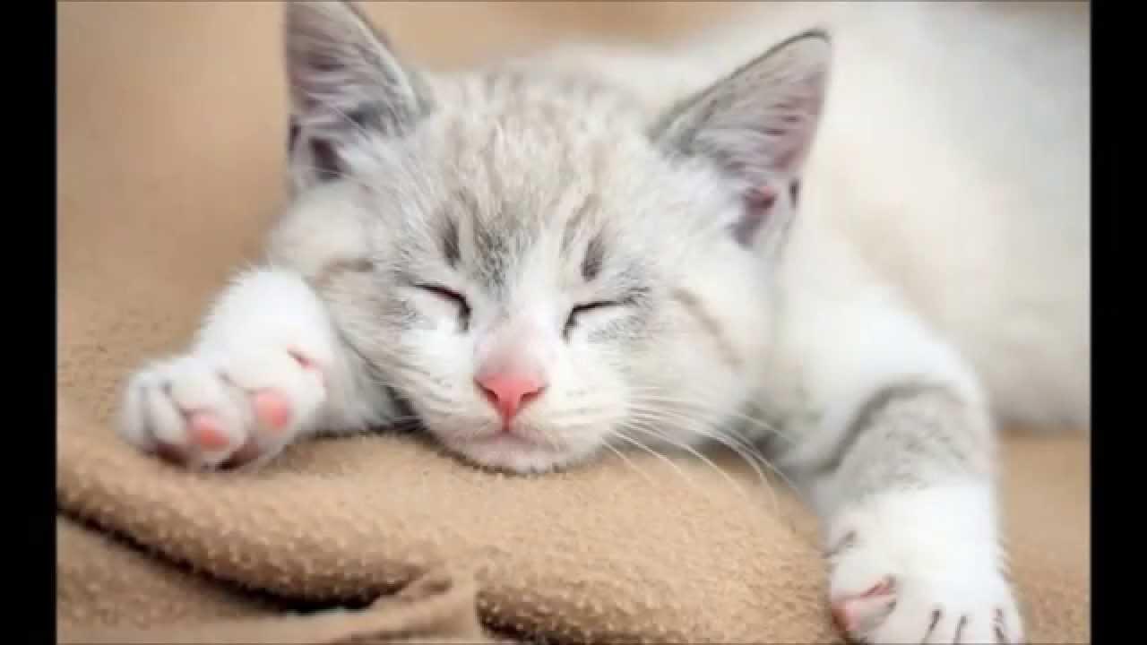 Unduh 87+ Gambar Kucing Imut Dan Lucu Keren Gratis