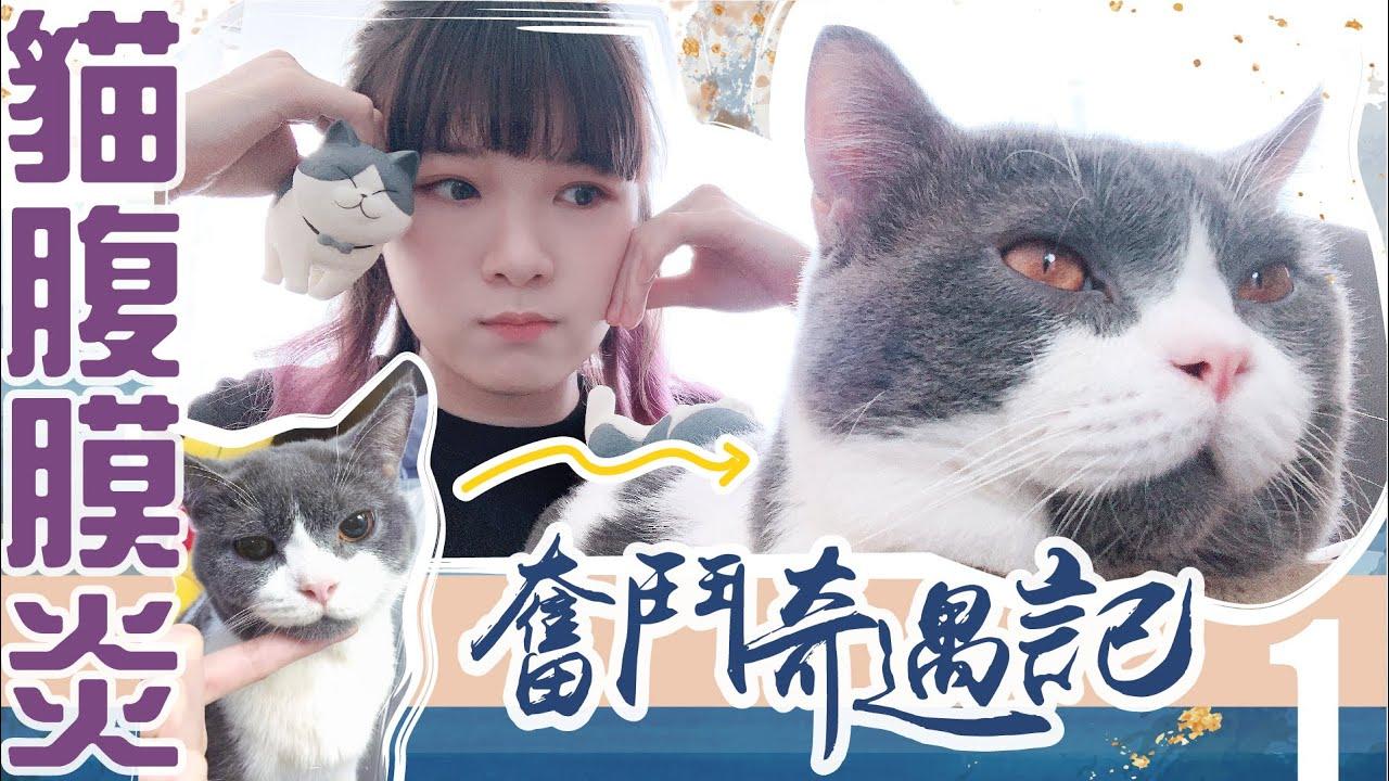 貓腹膜炎成因【臭貓奮鬥奇遇記】純分享 - YouTube
