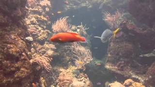 Oceanic Fish Tank with Colorful Marine Fish and Relaxing Bubbling Underwater Sounds
