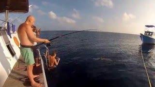 Рыбалка акулу мальдивы экстрим с подводной сьемкой shark fishing(Рыбалка на акулу мальдивы экстрим с подводной сьемкой shark fishing., 2013-03-04T10:43:36.000Z)