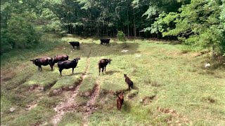 Day 3: Natchez Trace National Scenic Trail Thru-Hike
