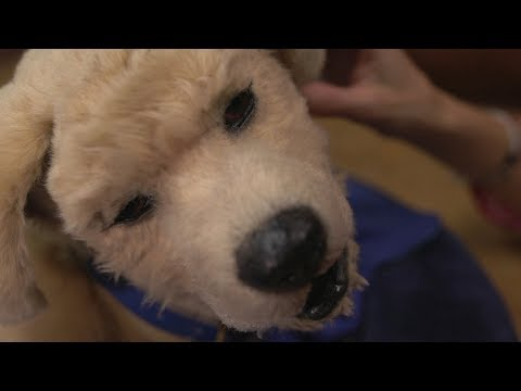 The Robot Dog That Helps With Dementia - BBC Click