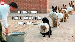Những Chú Chó Được Huấn Luyện Bài Bản Và Thông Mİnh Nhất | Top 10 Huyền Bí