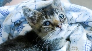 Rescuing a Feral Kitten in NYC thumbnail