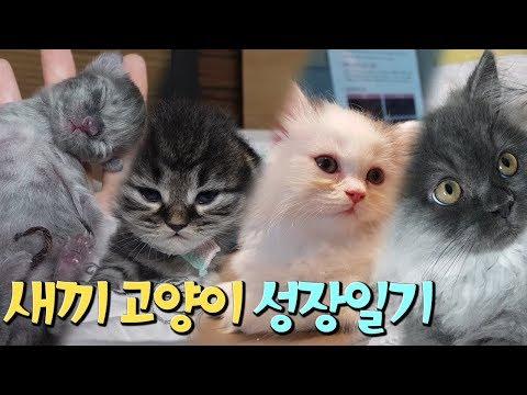 새끼고양이 폭풍성장일기, 3개월간의 기록 10분만에 보기!