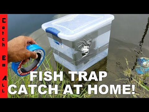 FISH TRAP BIN!: Homemade DIY Fish Trap Catches Fish!