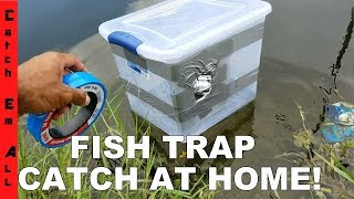 FISH TRAP BIN!: Homemade DIY Fish Trap Catches Fish!