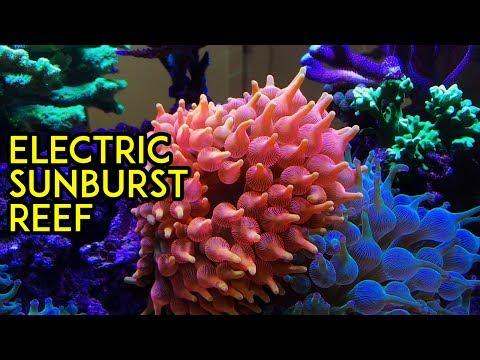 Electric Sunburst Reef by Premier Fish & Reef, Aquarium Tour