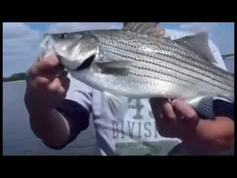 Heidecke Lake Striper Fishing Bonanza
