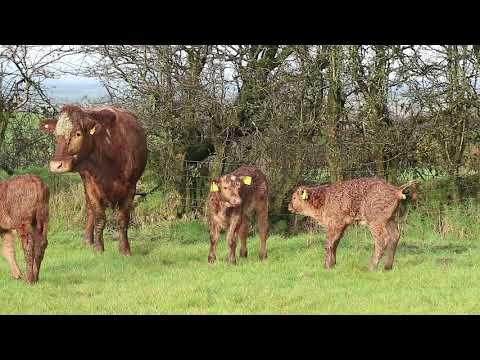 BETTER farm update: Wesley Browne in Co Monaghan
