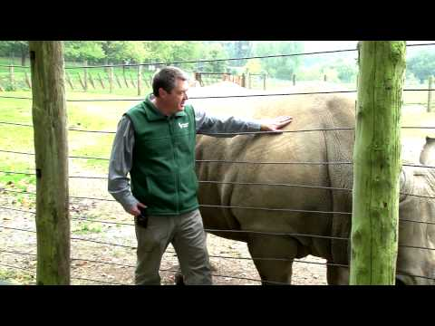 Go! Rhinos Charity Fundraising Auction Appeal - 30 October 2013