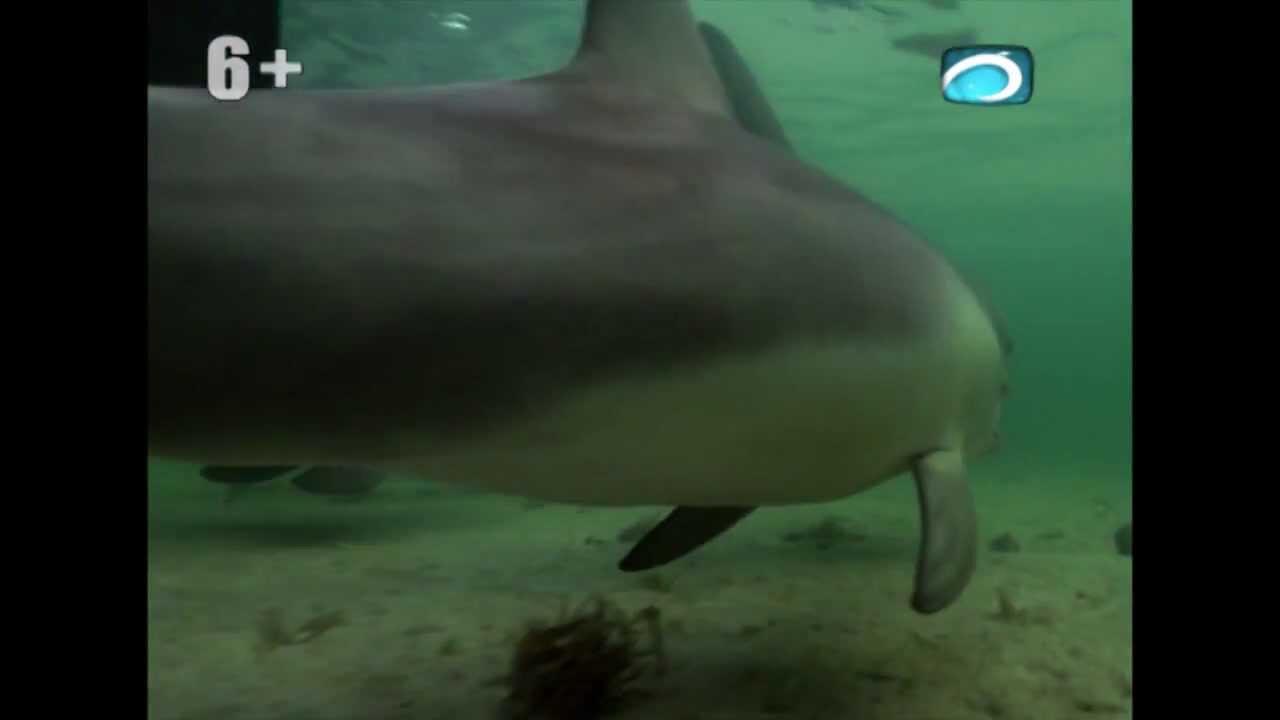 Документальный фильм   Дельфины залива акул