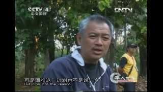 CCTV 4: Chinese World, Huarenshijie - interviewing Tomy Winata about rescue Sumatran Tiger