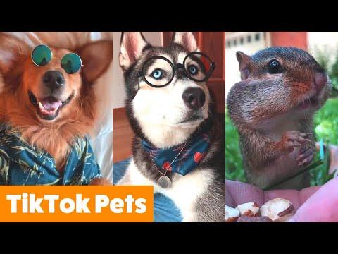 Cutest TikTok Animals To Make You Smile | Funny Pet Videos