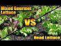 Mixed Gourmet Lettuce vs Head Lettuce