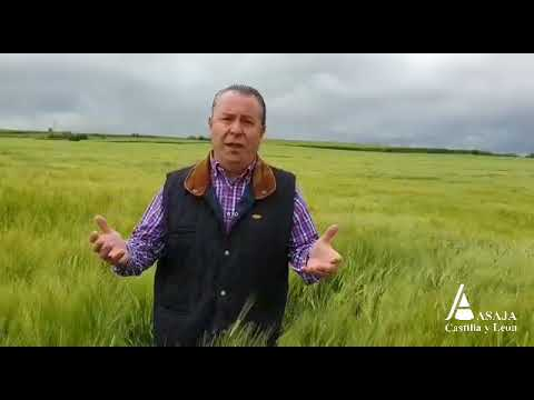 El presidente de Asaja agradece a San Isidro las lluvias primaverales