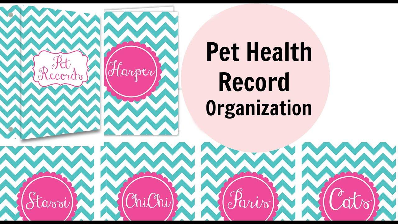 pet health records organization youtube