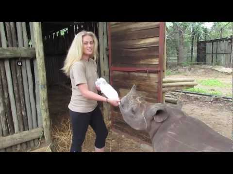 Thumbnail: Learning How To Feed Ollie The Baby Rhino