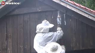 Uklanjanje stršljenova - Removing a hornets