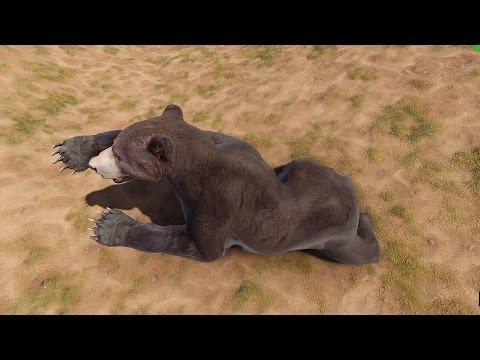 Загадки про диких животных с ответами — про зайца, волка