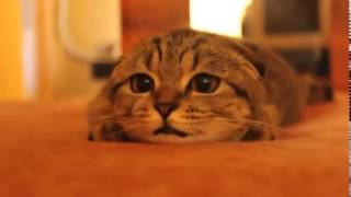 Kočka sleduje horor