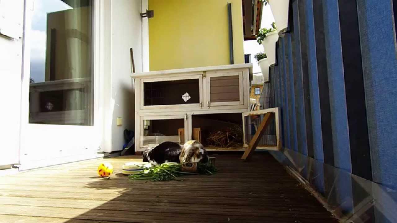das leben von bonnie clyde auf dem balkon kaninchen. Black Bedroom Furniture Sets. Home Design Ideas