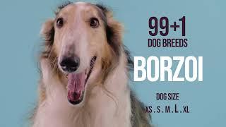 Borzoi / 99+1 Dog Breeds