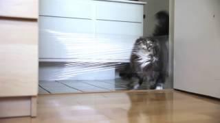 Кот + пленка (Cat + membrane/envelope)