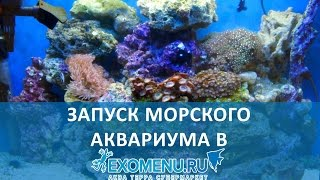 Запуск морского аквариума(Запуск морского аквариумного комплекта AquaEl REEFMAX. Объем - 90 литров + 10 литров САМП Освещение - встроенное Купи..., 2016-06-02T13:02:15.000Z)