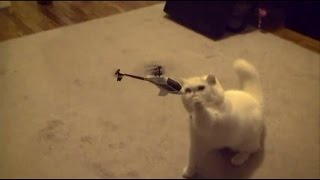 Кот сбивает вертолёт(Приколы с котами., 2016-09-29T03:00:01.000Z)
