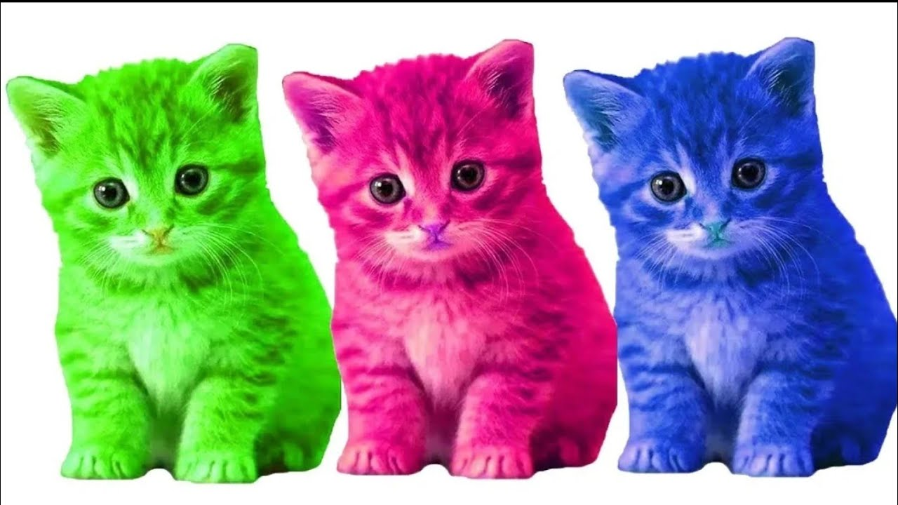 Semua Nama Jenis Kucing Lucu Youtube