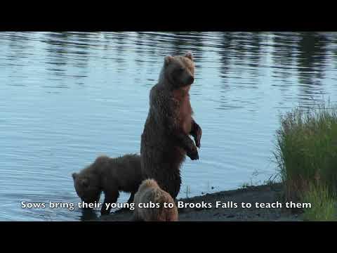 Katmai Brooks Falls, Alaska