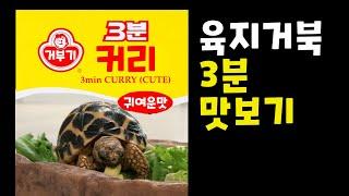 육지거북이 귀여움을 3분간 맛보자? (tortoise …
